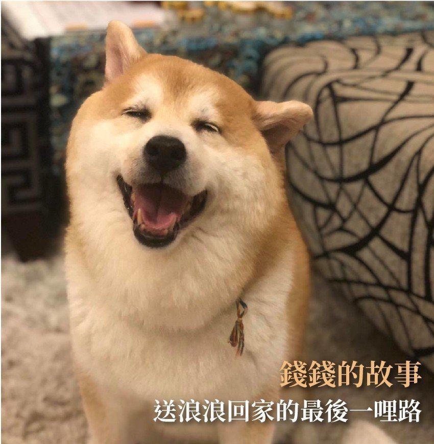 終養不棄養 助創傷犬走出陰霾