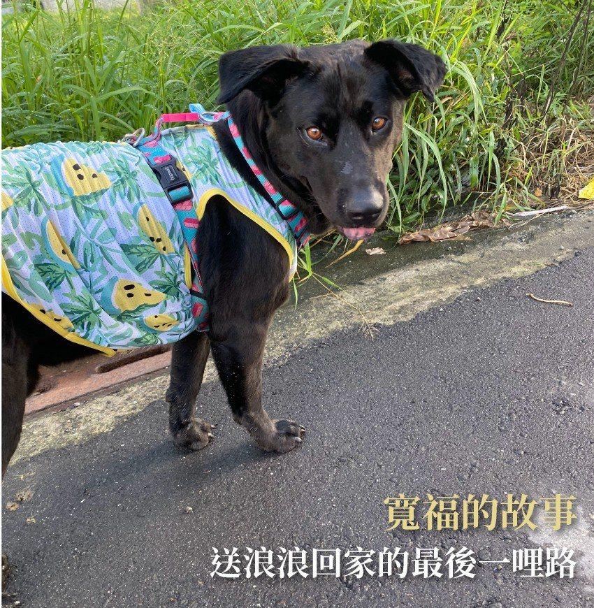 大黑狗的幸福路 投入邊緣犬照顧的中途家庭