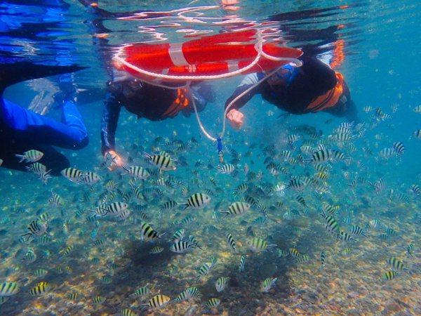 台北國際夏季旅展 新北推海岸生態旅遊