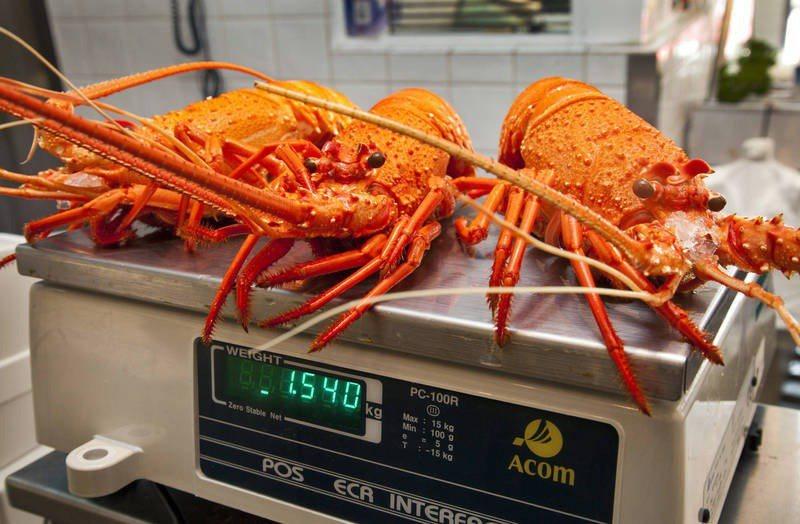 隨著中國市場禁止澳洲龍蝦進口,澳洲國內龍蝦變得供過於求,導致澳洲民眾已經吃到「厭倦」。(截圖自彭博)