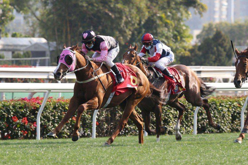 14日是香港農曆新年第一個賽馬日,當天沙田馬場共上演11場賽事。全日投注額高達18.43億港元,按年升兩成半,創農曆新年賽馬日的新高。(中新社)