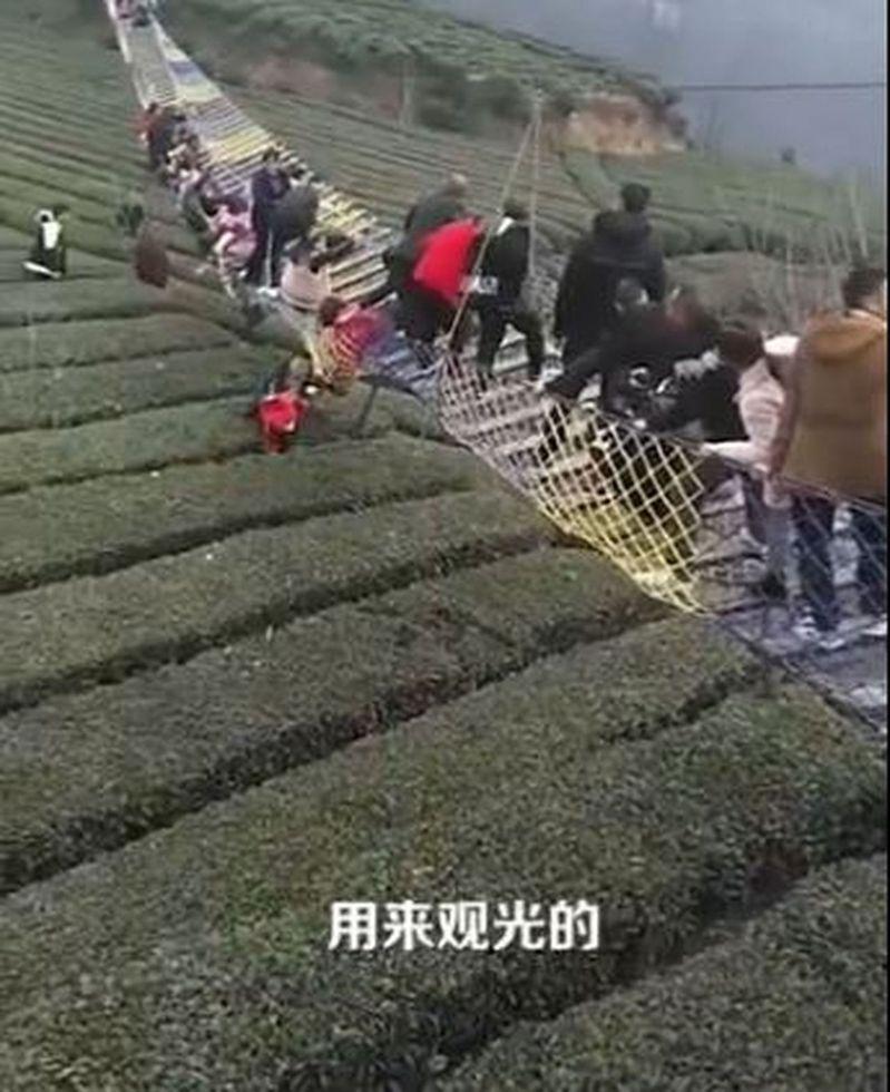 湖北宜昌網紅吊橋側翻,多人跌落茶園。(視頻截圖)